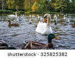 Lake With Swans And Ducks In...