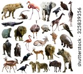 Set Of Hyenas And Other Africa...