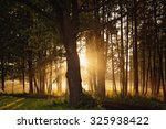 trees in sunlight on a late... | Shutterstock . vector #325938422