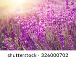 lavender bushes closeup on... | Shutterstock . vector #326000702