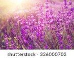 lavender bushes closeup on... | Shutterstock . vector #326000702