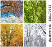 four seasons. trees in spring ... | Shutterstock . vector #326170838