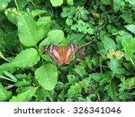Brown Peacock Butterfly Baskin...