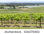 vineyard in hunter valley  nsw  ... | Shutterstock . vector #326370302