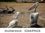 Two Pelicans And Two Deers In...