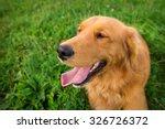 golden retriever | Shutterstock . vector #326726372