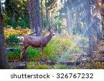 Deer Standing In Sunshine In...