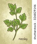 parsley. hand drawn sketch.... | Shutterstock .eps vector #326829146