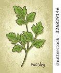 parsley. hand drawn sketch.... | Shutterstock .eps vector #326829146