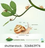 Garden Snail On A Branch ...