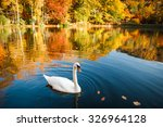White Swan On A Lake In The...