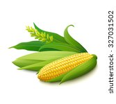 yellow corn on the cobs  male... | Shutterstock .eps vector #327031502