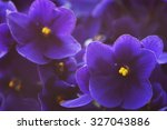 Close Up Of African Violets ...