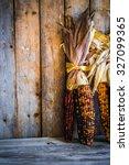 Multicolored Indian Corn On...