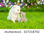 Stock photo kitten kissing white swiss shepherd s puppy on green grass 327218702
