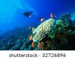 scuba diver exploring coral reef | Shutterstock . vector #32726896