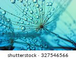 Dandelion Flower With Water...