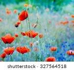Poppy Flowers. Shallow Depth Of ...