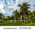 Coconut Plantation In Suan...