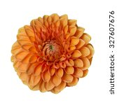 Flower Orange  Dahlia On A Lon...