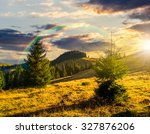 two fir trees on hillside of mountain range with coniferous forest and meadow in evening light - stock photo