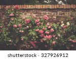 Stock photo background of gentle light pink roses on stonewall in garden summer day 327926912
