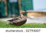 duck  female mallard  enjoying... | Shutterstock . vector #32793007