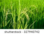 paddy produce grain in rainy... | Shutterstock . vector #327940742