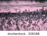 flock of birds at sunset  ding... | Shutterstock . vector #328188