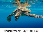 Sea Turtle Swimming In...