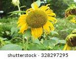 sunflowers | Shutterstock . vector #328297295