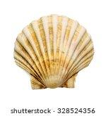 Scallop Shell Over White...
