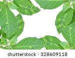 fresh green leaves on white... | Shutterstock . vector #328609118