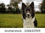 border collie dog portrait... | Shutterstock . vector #328632905