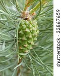 young pine cone | Shutterstock . vector #32867659