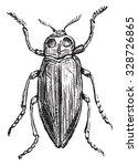 buprestis  vintage engraved... | Shutterstock .eps vector #328726865
