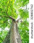 green forest tree | Shutterstock . vector #328802762