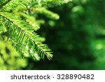 Beautiful Fir Tree Twigs ...