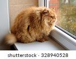 Stock photo funny round cat 328940528