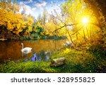 White Swan On Lake In Autumn...