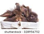 Two Cute Lion Head Rabbit...