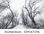 Man On Path With Spooky Trees...