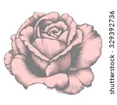 rose. pencil drawing. | Shutterstock .eps vector #329392736