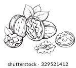 walnut. hand drawn sketches... | Shutterstock .eps vector #329521412
