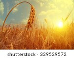 Barley Field At Sunset. Fishey...