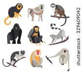 Collection Of Primates In Flat...