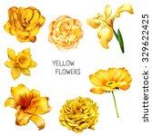 Set Of Beautiful Yellow  Orang...