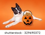 a friendly akita breed dog... | Shutterstock . vector #329690372