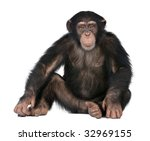 young chimpanzee   simia... | Shutterstock . vector #32969155