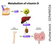 metabolism of vitamin d.... | Shutterstock .eps vector #329698526